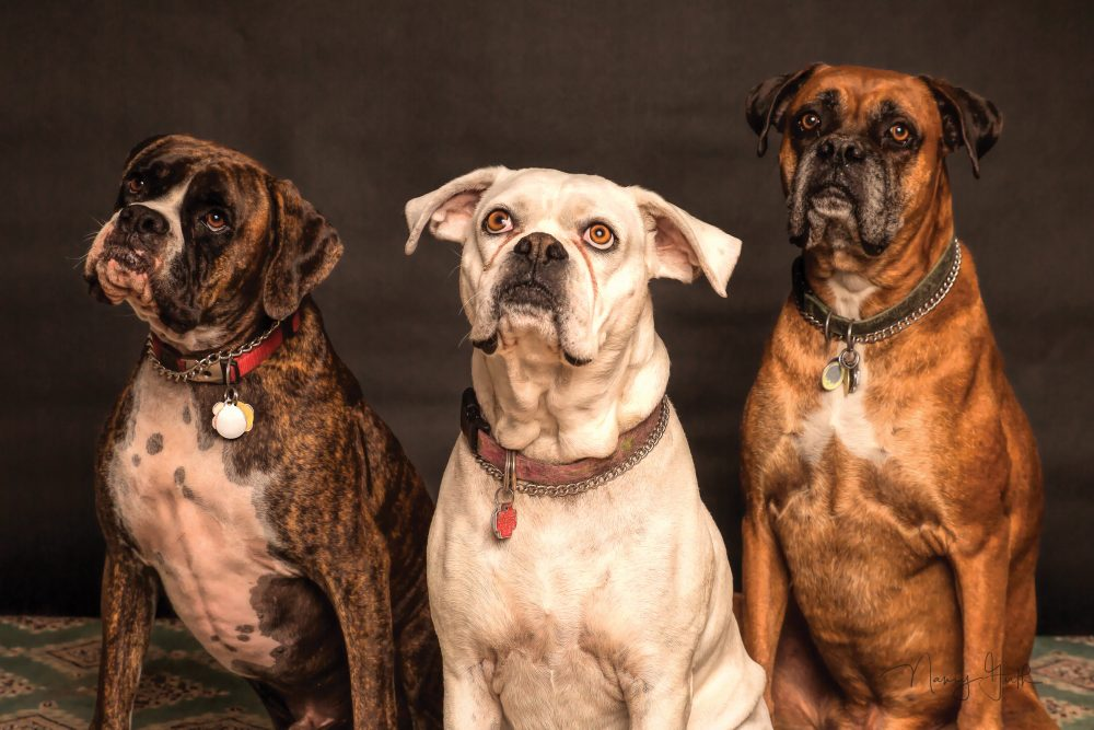 What Can Ivan Pavlov (and his dogs) Teach us About Social Selling? - Digital Leadership Associates