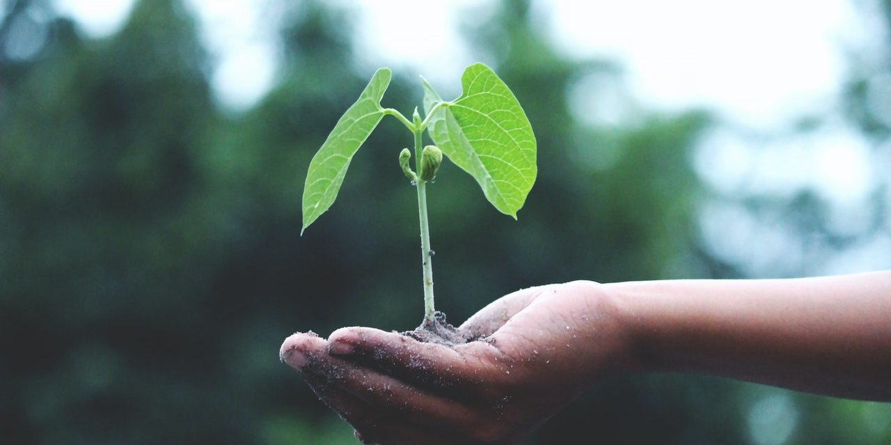 https://dlaignite.com/wp-content/uploads/2020/07/person-holding-a-green-plant-1072824-1280x640.jpg